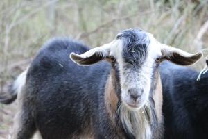 Meet the Buck Brothers – LiquidMoon Farms